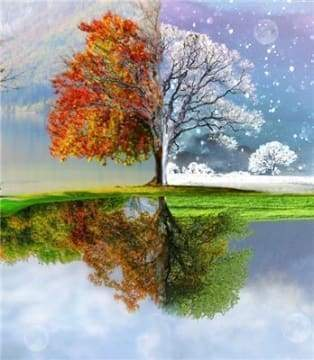 Diamond Painting | Diamond Painting - Tree Multi Seasons | Diamond Painting Landscapes landscapes trees | FiguredArt