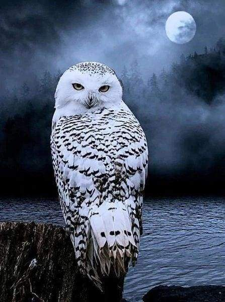 Diamond Painting | Diamond Painting - White Owl | animals Diamond Painting Animals owls | FiguredArt