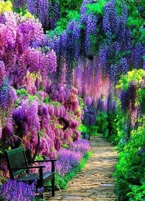 Diamond Painting | Diamond Painting - Wisteria Flower | Diamond Painting Landscapes landscapes | FiguredArt
