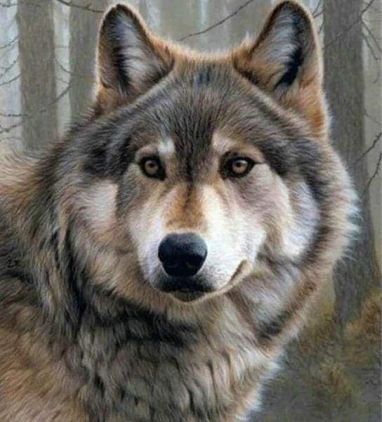 Diamond Painting | Diamond Painting - Wolf Portrait | animals Diamond Painting Animals | FiguredArt