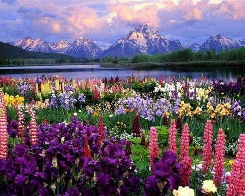 paint by numbers | Flowers and Lake near the Mountain | advanced flowers landscapes | FiguredArt