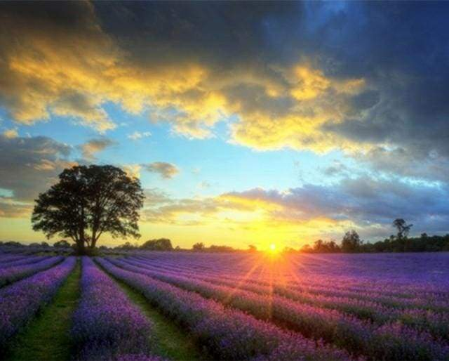 paint by numbers | Lilac Field And Sunset | advanced landscapes | FiguredArt