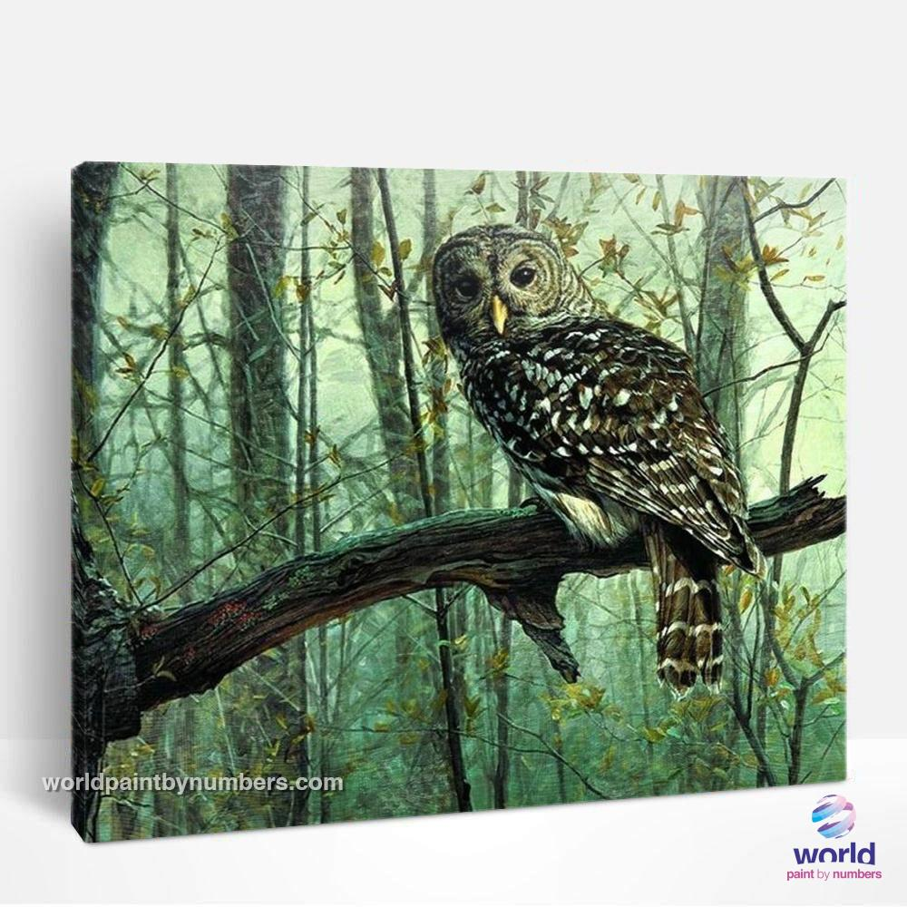 Forest Owl - World Paint by Numbers™ Kits DIY