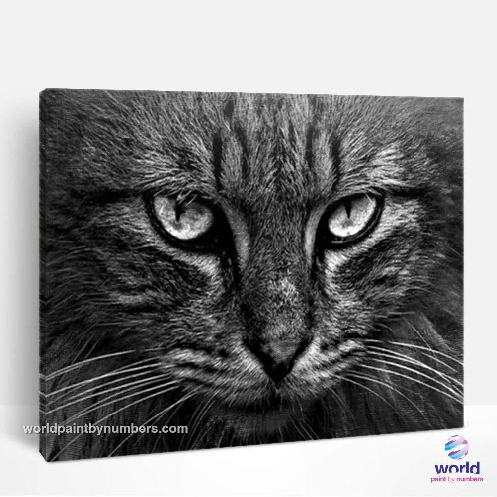Grayscale Cat - World Paint by Numbers™ Kits DIY