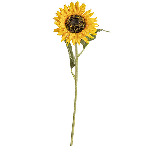 "30"" Longstem Golden Sunflower"
