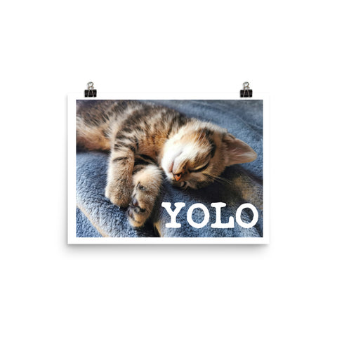 Yolo Cat Photo paper poster