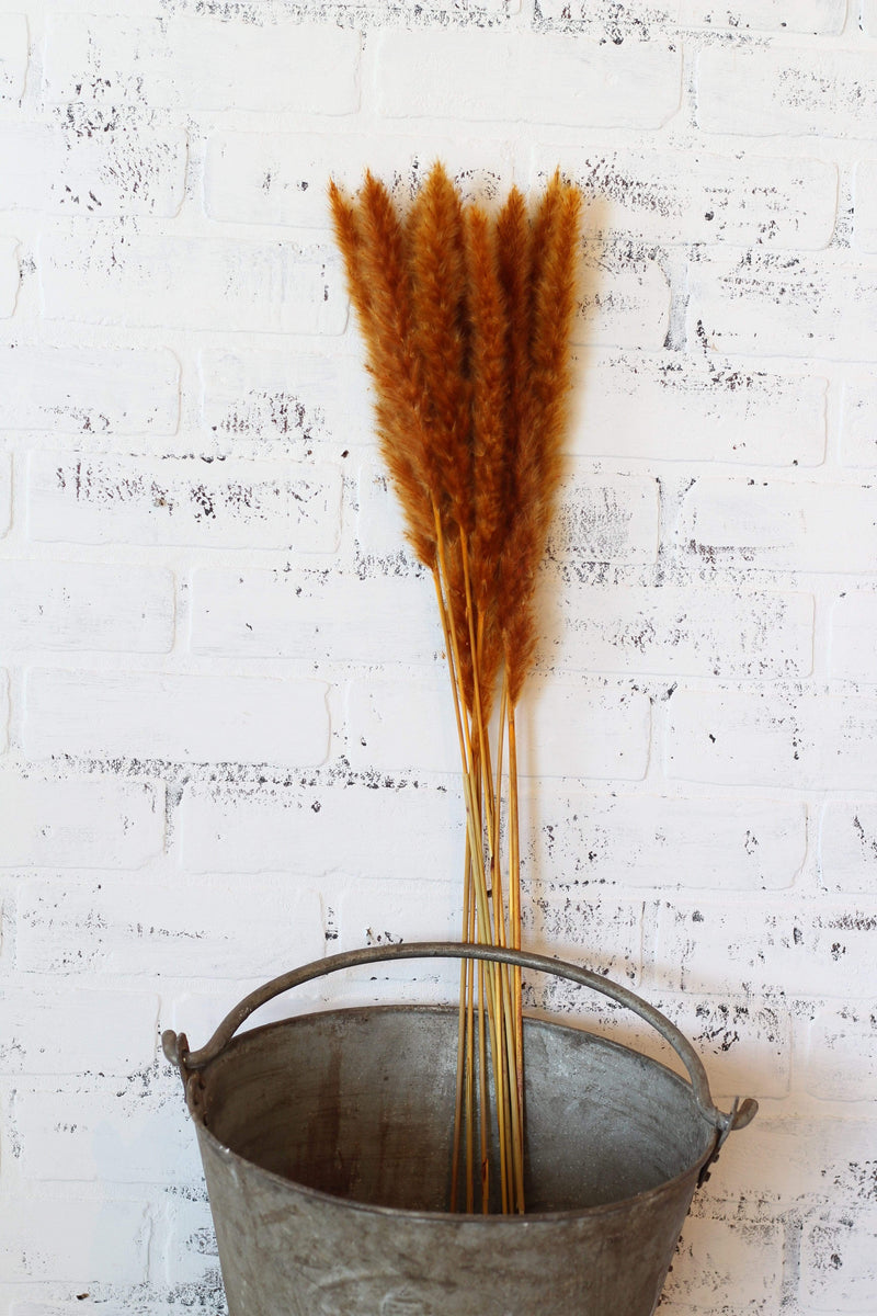 Dried Mustard Pampas Grass Bundle
