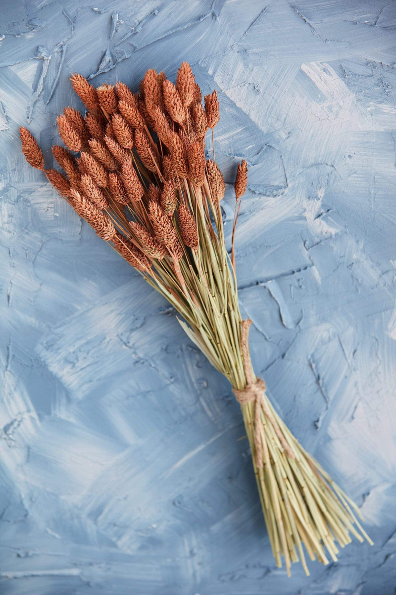 Dried Natural Cannary Grass