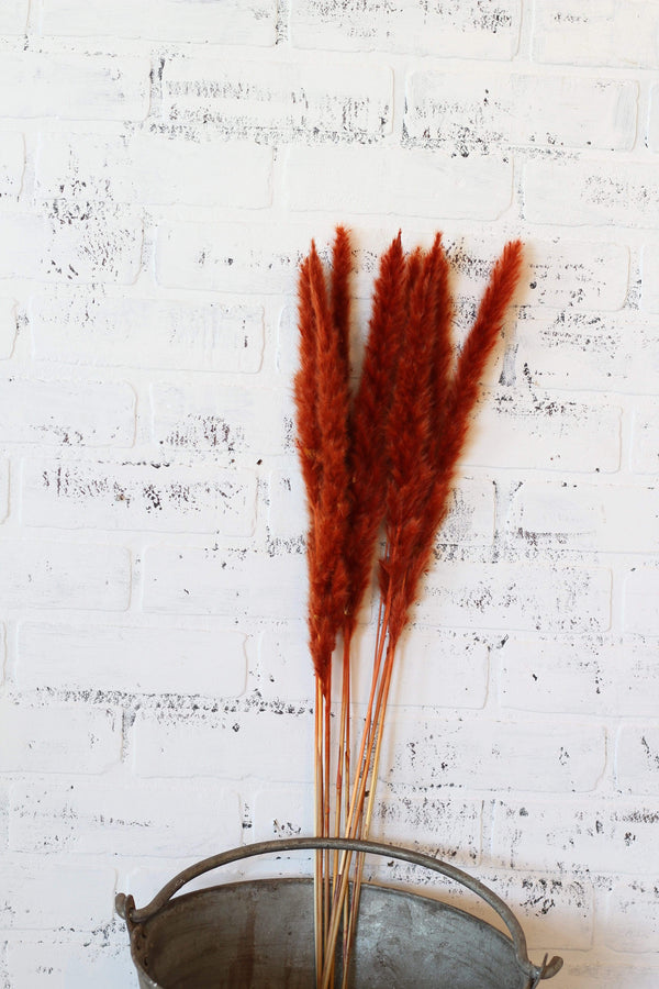 Dried Rust Pampas Grass Bundle
