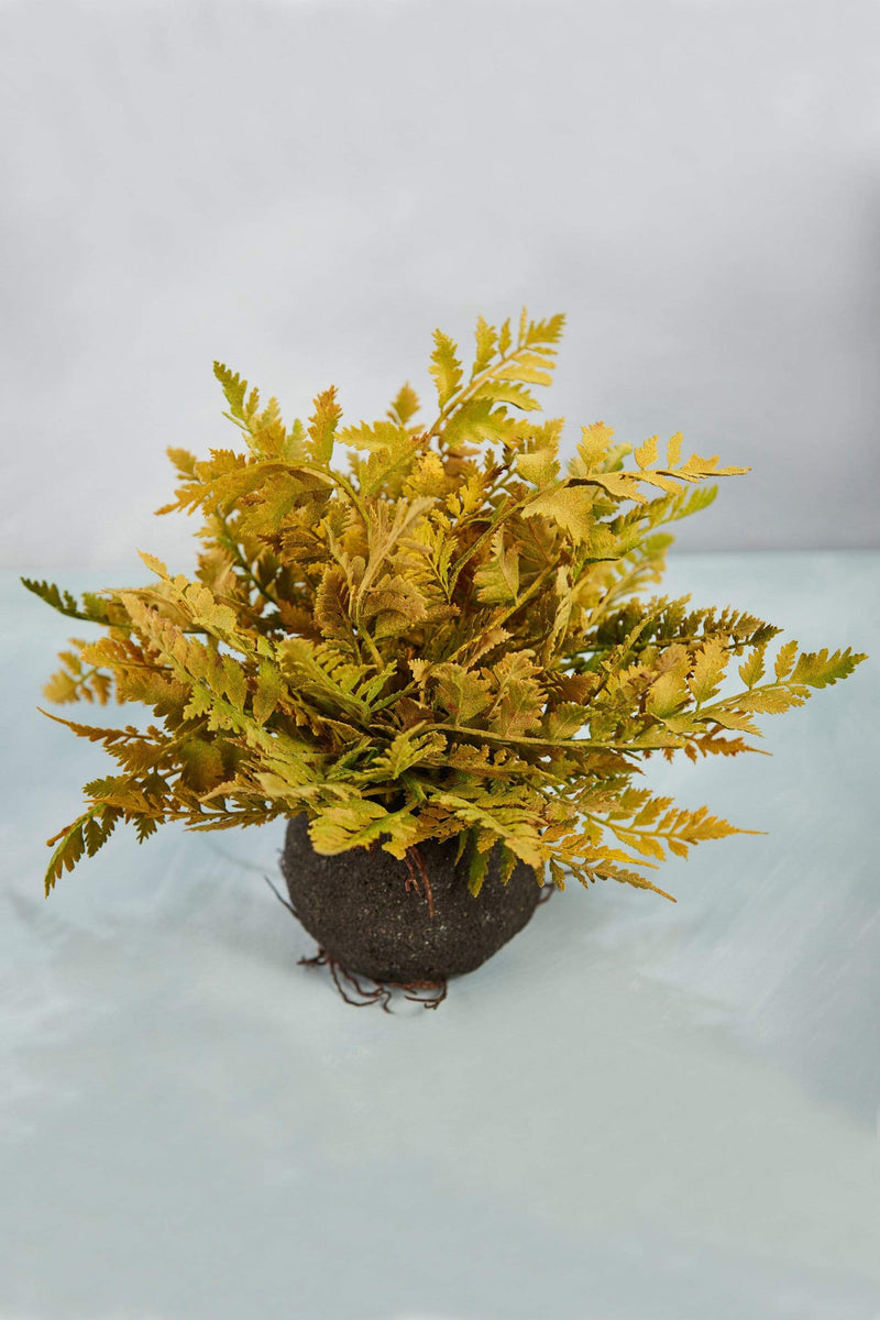 fern ball root yellow green