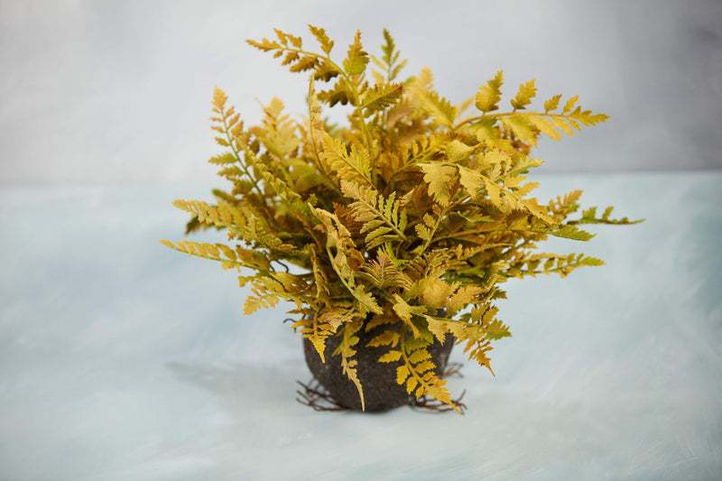 "15"" fern root ball yellow green fern"