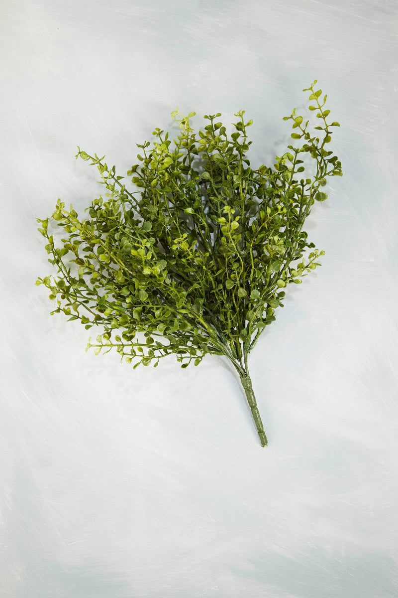 Lush Baby Grass Bush Greenery Stem