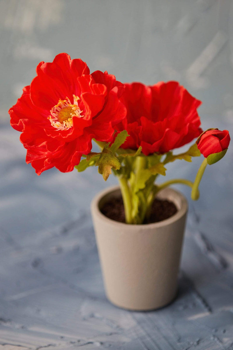 "9"" Potted Poppy"