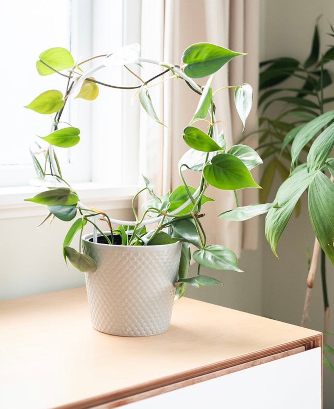 Orbit Mini Plant Trellis