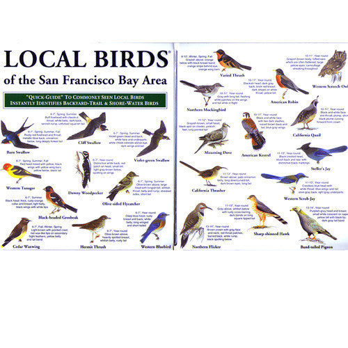 Guide Local Birds San Francisco Bay Area