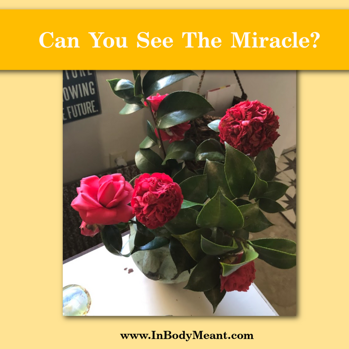 Can You See The Miracles Right In Front Of You?
