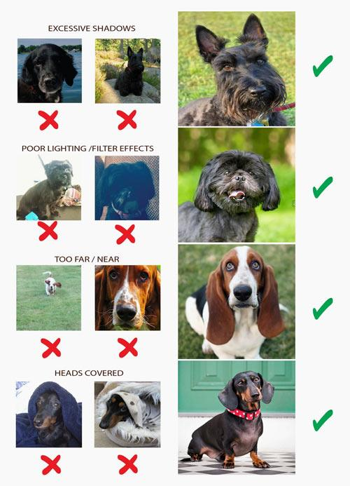 Regal Paws Photo Guidelines