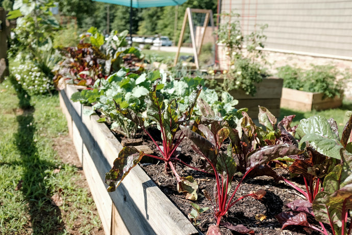 A simple guide to creating a Food Garden