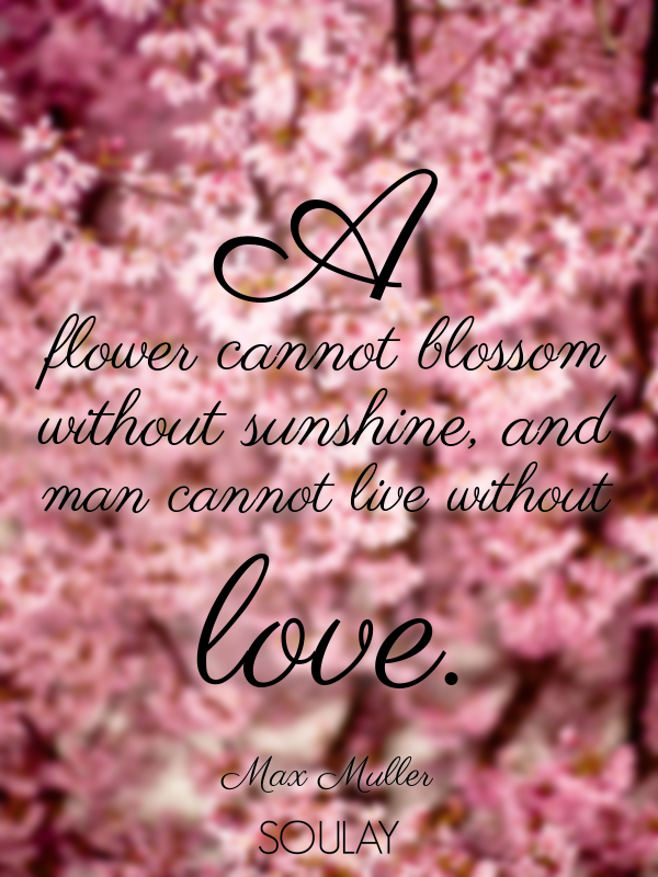 A flower cannot blossom without sunshine, and man cannot live witho... - Quote Poster