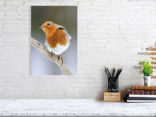 Load image into Gallery viewer, Robin