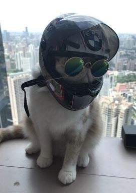 Motorcycles helmets for pet