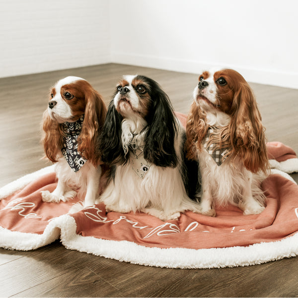 Cavalier King Charles Spaniels sitting on a pink dog blanket reading the doggy snuggle is real.