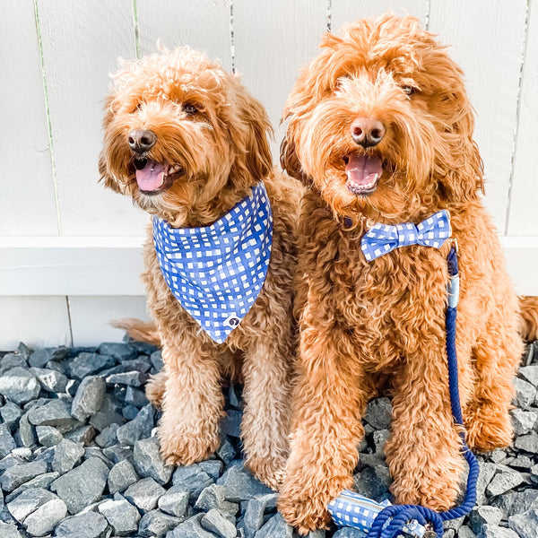Two doodles wearing coordinating Navy Watercolor Plaid Dog Accessories.