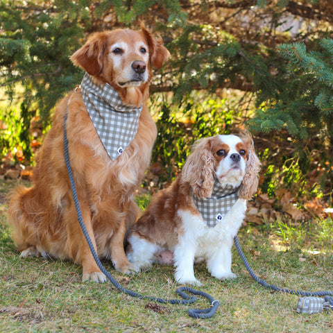 Mountain Stone Dog Bandanas with Stone Rope Dog Leashes & Waste Bag Holders modeled by Golden Retriever and Cavalier King Charles Spaniel