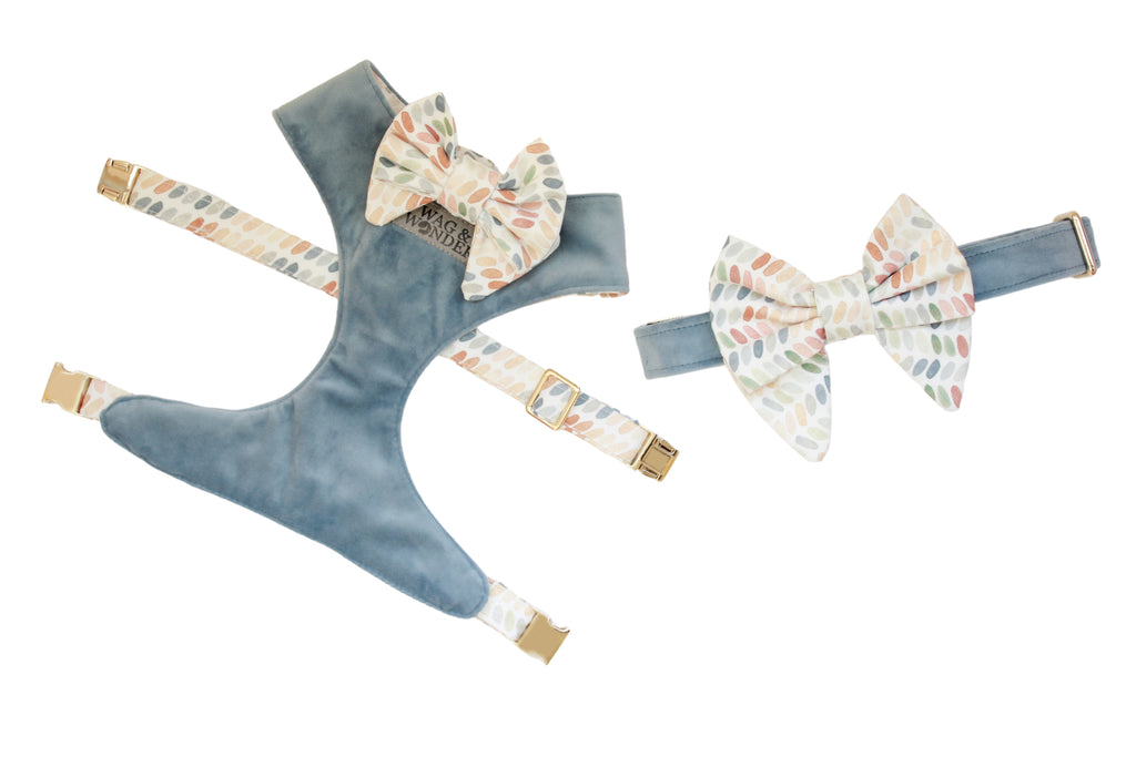 Blue velvet dog harness and dog collar with multi-color print dog bows laid out