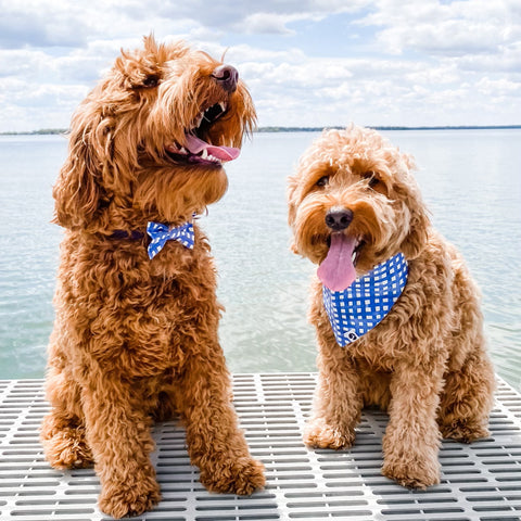 Two doodles on a dock wearing navy plaid dog collar with bow tie and navy plaid dog bandana.