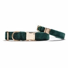 Velvet Evergreen Classic Dog Collar