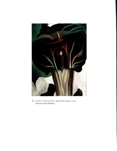 "Vintage book plate Georgia O'Keeffe ""Jack in the Pulpit / Black and White"" [1930]"