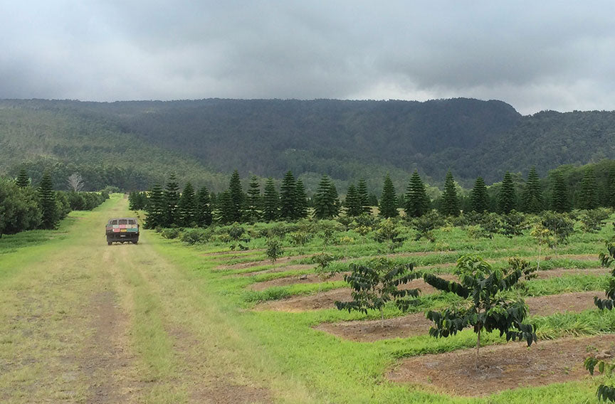 bee truck driving to the macadamia nut farm in pahala, hawaii