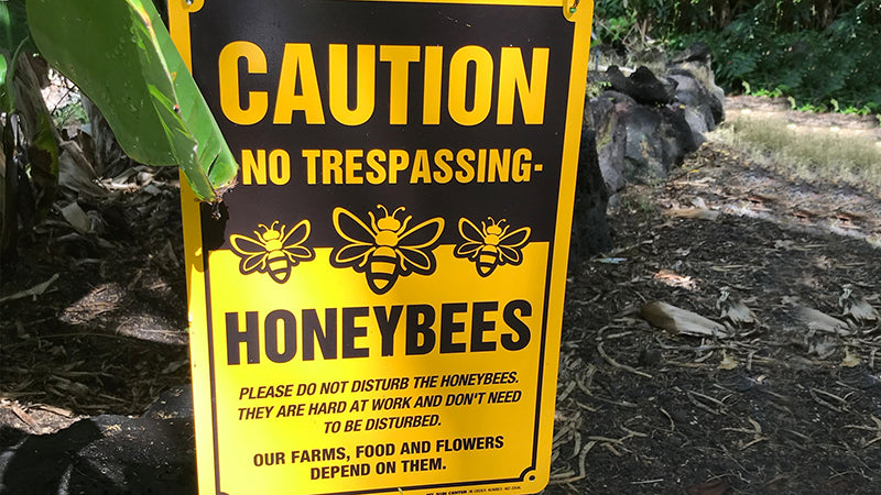 caution honeybees sign