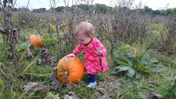 Pick Your Own Pumpkin Our Kid
