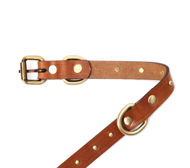 best dog collars for large dogs