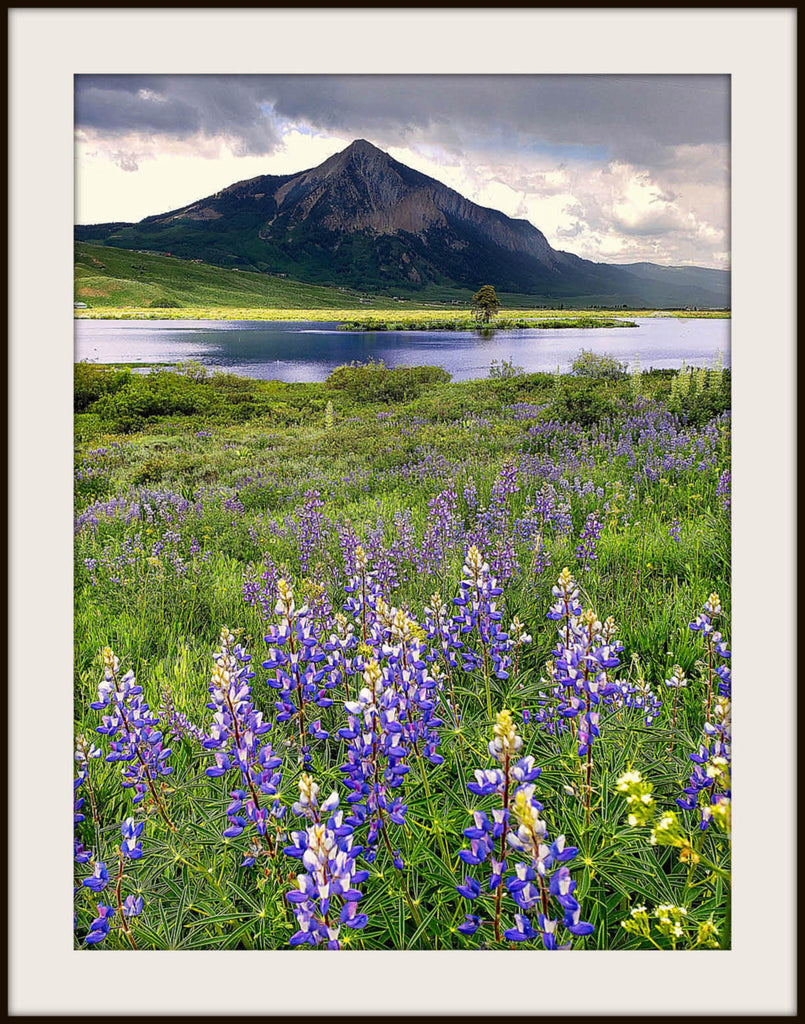 See Colorado's Abundant Wildflowers at the Crested Butte Wildflower Festival.