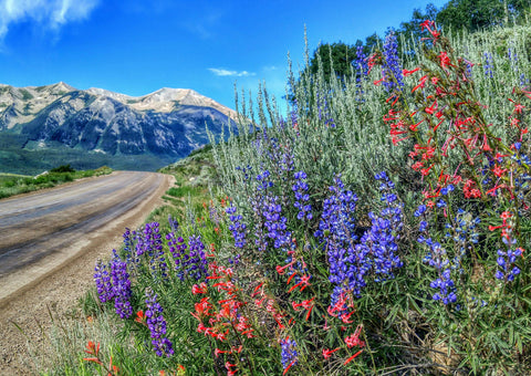 61d48c248 Crested Butte Wildflower Festival Spotlights the Town s Colorful and ...