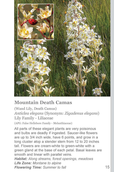 Rocky Mountain Wildflowers Field Guide (EBook Edition) Order only through Amazon Kindle, Apple iBooks, Barnes & Noble Nook, and Kobo