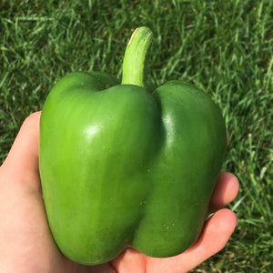 Peppers - Green
