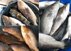 The Sampan Catch - Farm-Fresh Fish