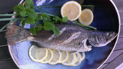 Barramundi / Sea Bass sampancatch.com