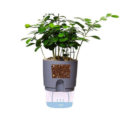 Self Watering Plant Flower Pot With Water