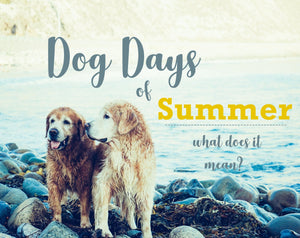 Dog Days of Summer...What Does it Mean?