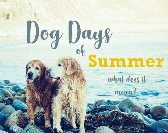 Dog Days of Summer Pet Products Cool Your Dog Off Dog Shampoo Bar
