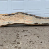 Live Edge Maple Wood Slab #1149