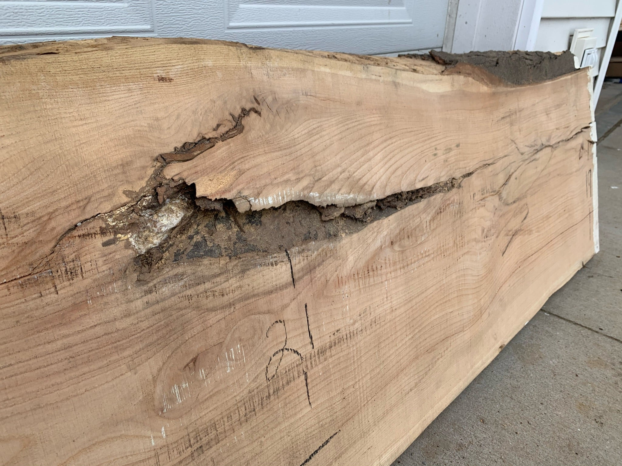 Honey Locust slab #1165