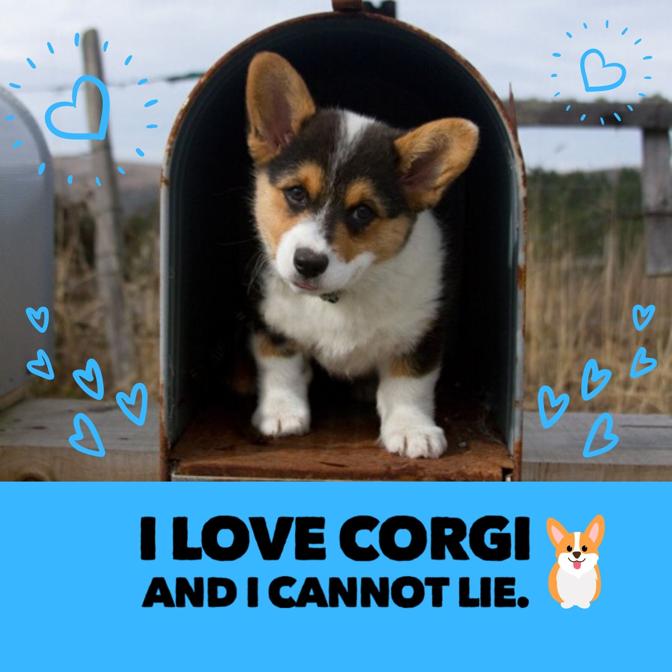 I love Corgis and I cannot lie.