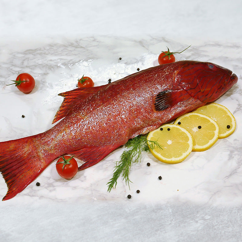 Red Grouper (Whole, 1pc)