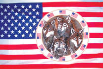 USA FOUR WOLVES IN CIRCLE 3' X 5' FLAG (Sold by the piece)